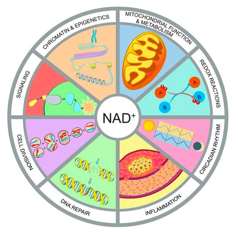 NAD+ IV Therapy Positive Benefits