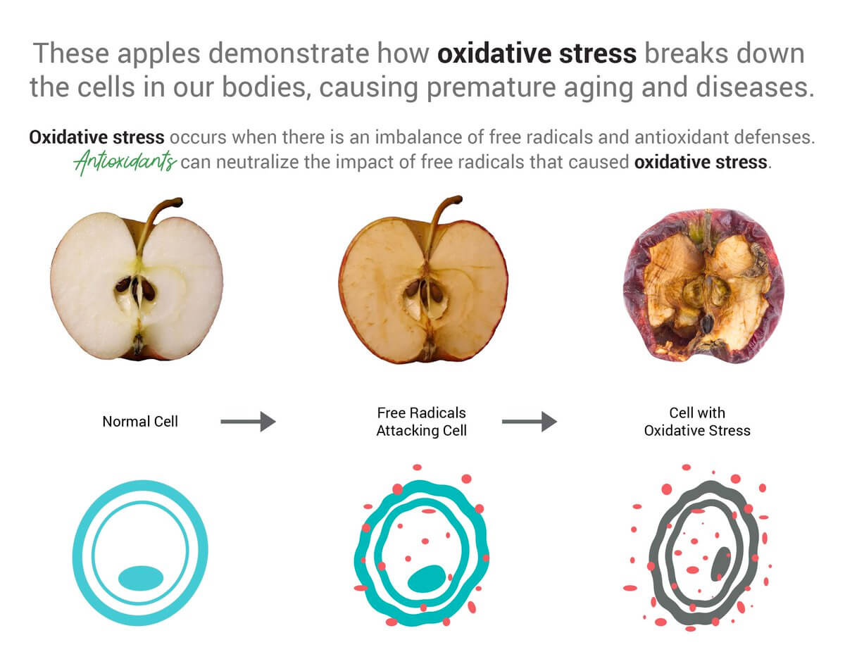 What is Oxidative Stress?